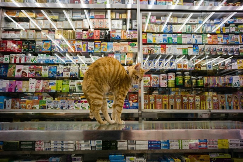 Supermarket - EP DHA F 2 hberry AZ-MOA MAS ABAZOA MAS ERRSTY