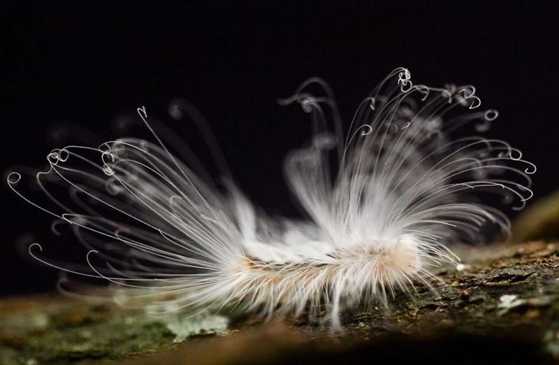 fluffy - Organism - (Y
