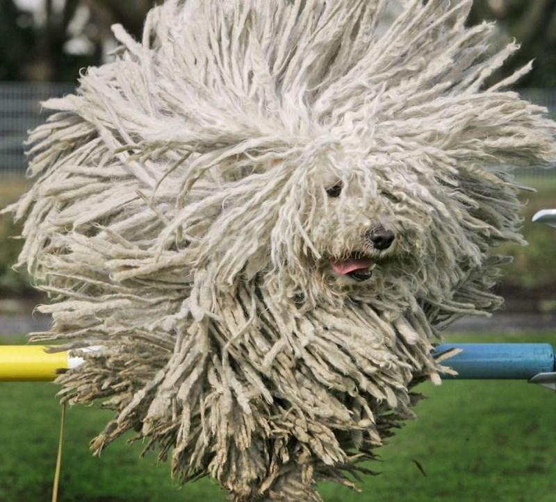 fluffy - Dog