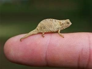 Lizard that is so small
