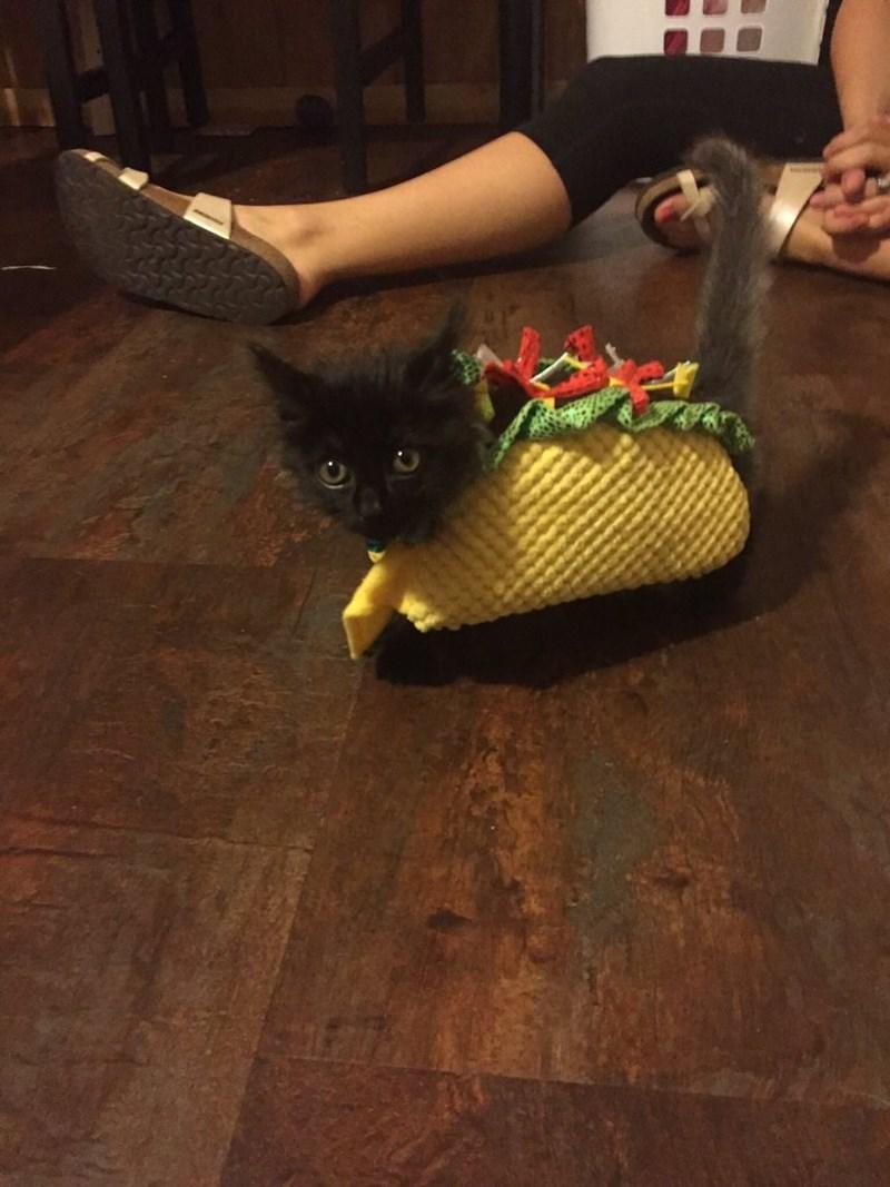 tacos Cats - 9000618752