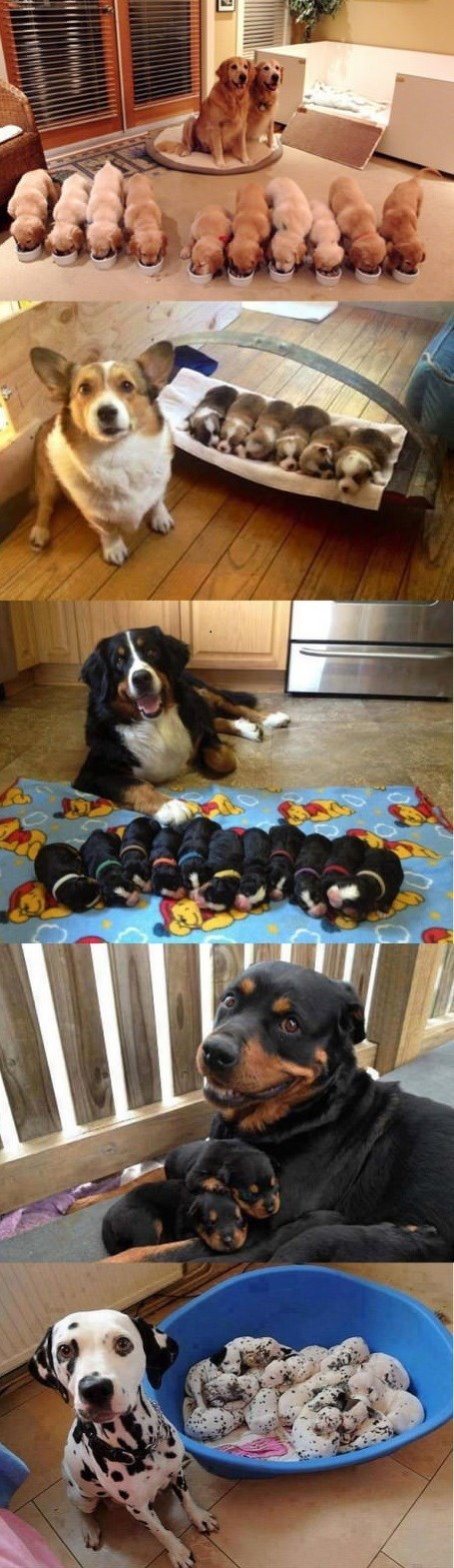 dogs puppies parenting proud family - 9000619520