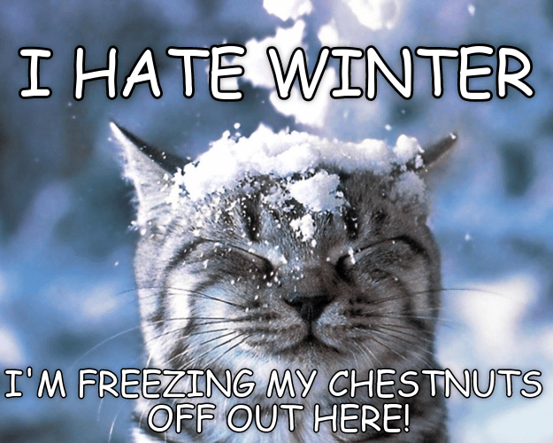 hate cat freezing chestnuts winter caption - 9000725504