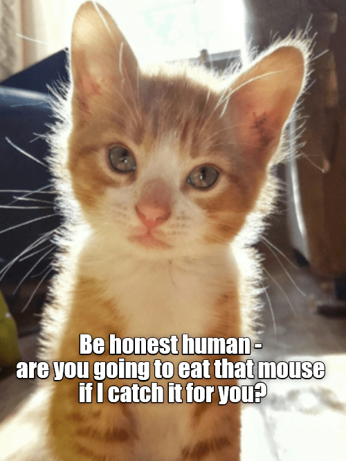 cat honest catch eat caption going mouse