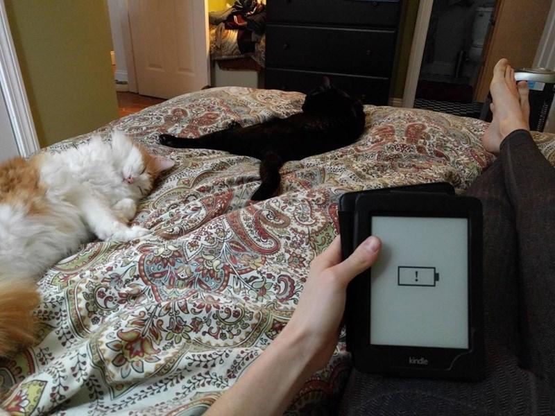 batteries Cats - 9000999168
