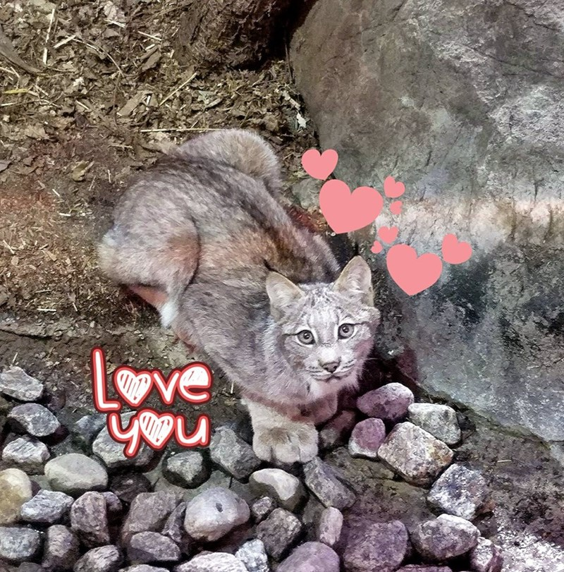 Cat - ve u