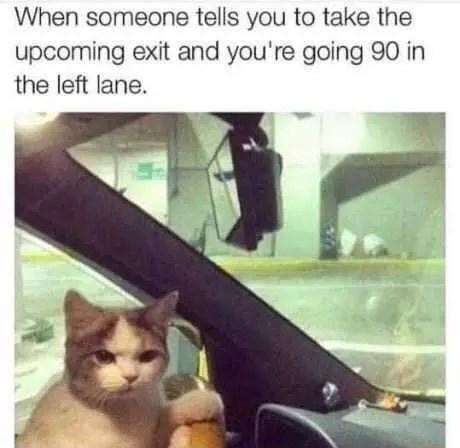 Memes Cats - 9001077504