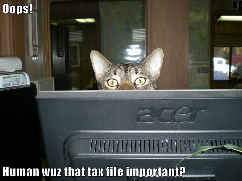 Oops! Human wuz that tax file important?