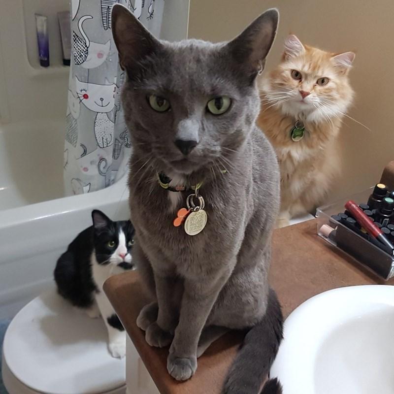 squad Cats - 9001096448