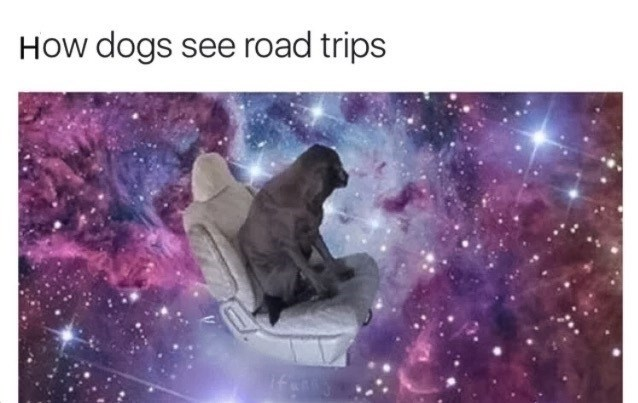 dogs me_irl - 9001140992
