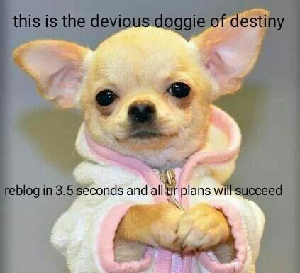 pupper doggo rare pupper - 9001142528