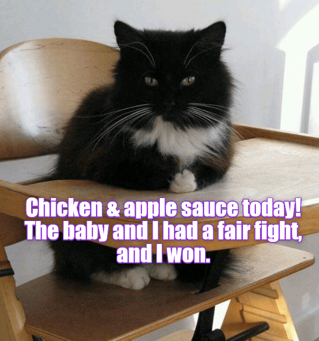 cat baby chicken applesauce fight fair won caption - 9001307648