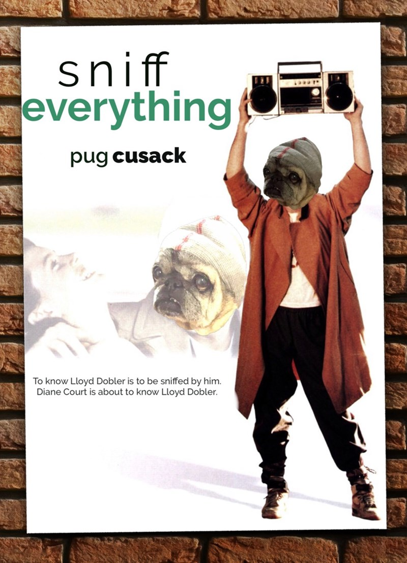 Poster - sniff everything pug cusack To know Lloyd Dobler is to be sniffed by him. Diane Court is about to know Lloyd Dobler.
