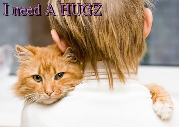 cat hugz caption need - 9001330688