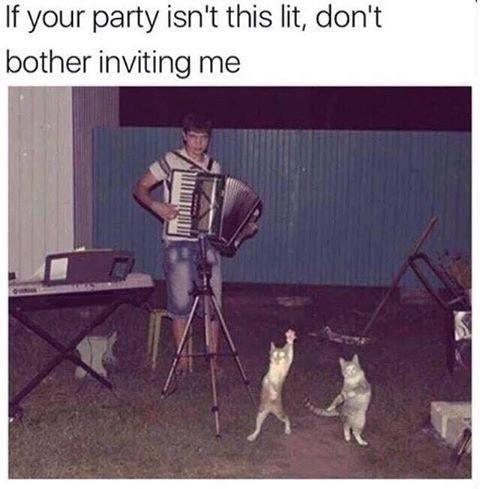 Memes - 9001349888