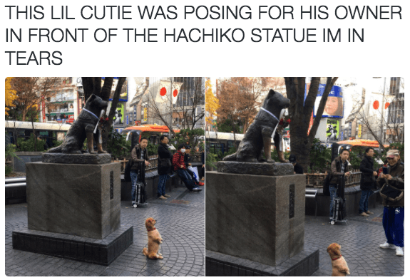 twitter dog posing with statue