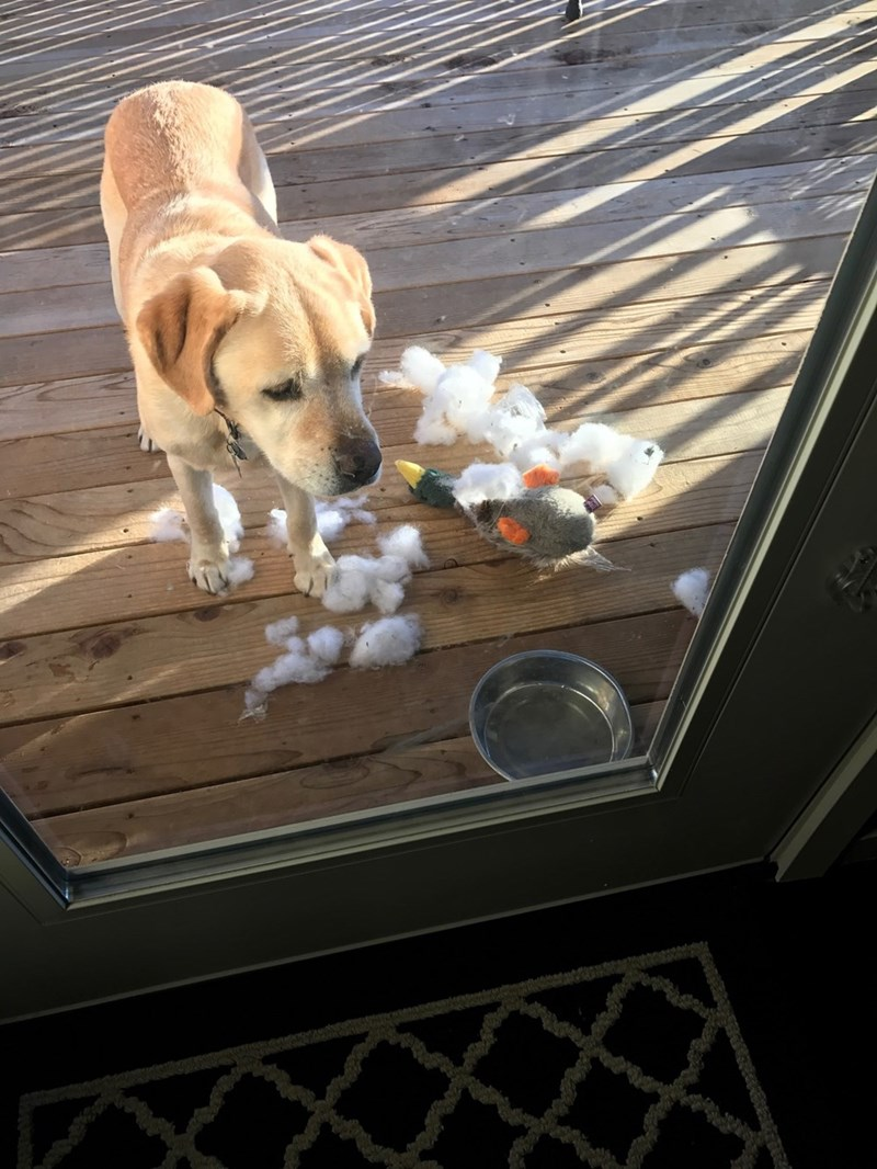 murder,dogs,toys