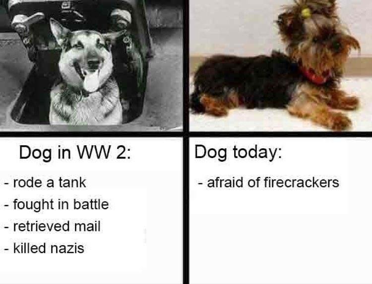 Badass,dogs