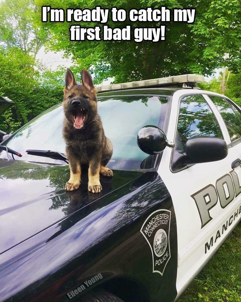 dogs caption police - 9001602560