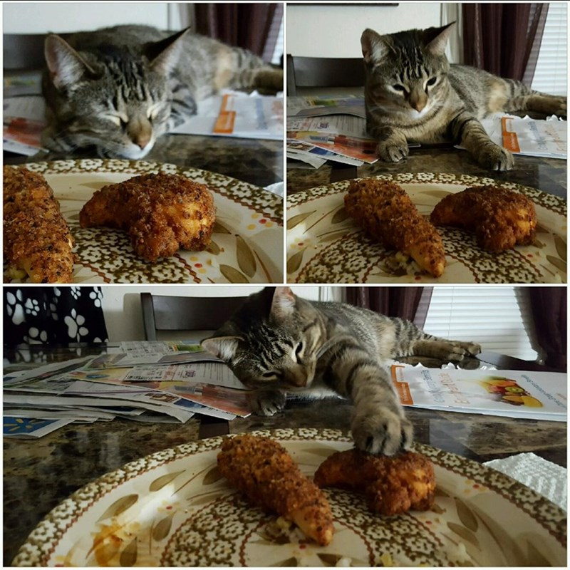 chicken,i can has,Cats