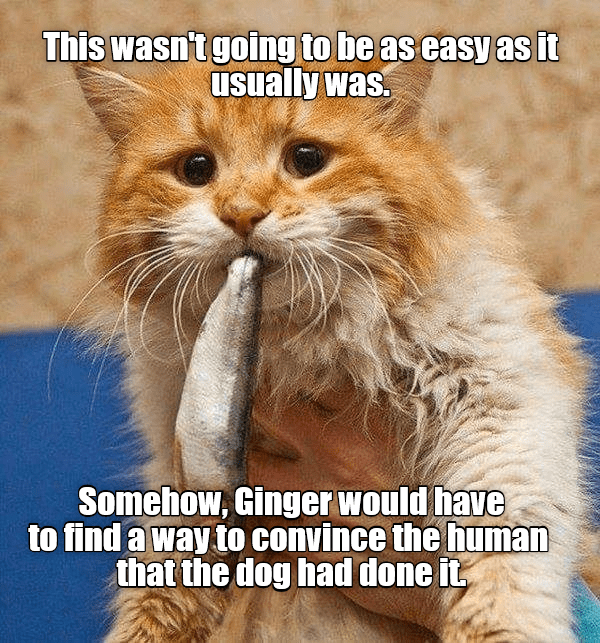 ginger funny cats cats are weird cat memes - 9001635072