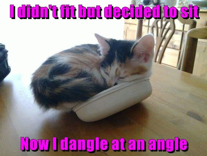 fit kitten didnt sit caption - 9001722368