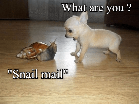 Dog asks the snail what are you.