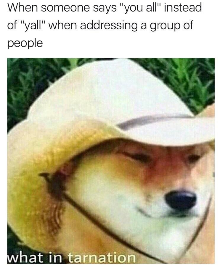 Memes doggo tarnation doggo - 9001867520