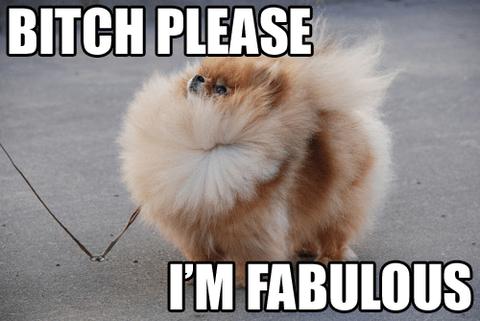 Mammal - BITCH PLEASE I'M FABULOUS