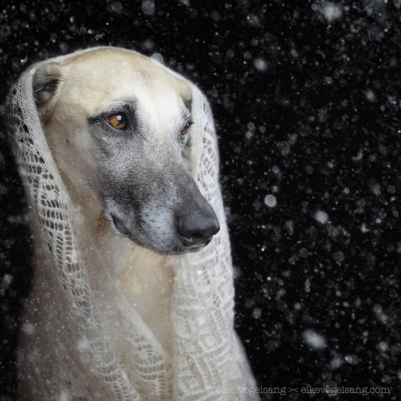 Dog - elke vogelsang - elkevogelsang.com ww7