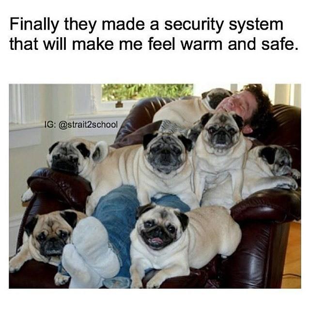 Memes doggo - 9001965824