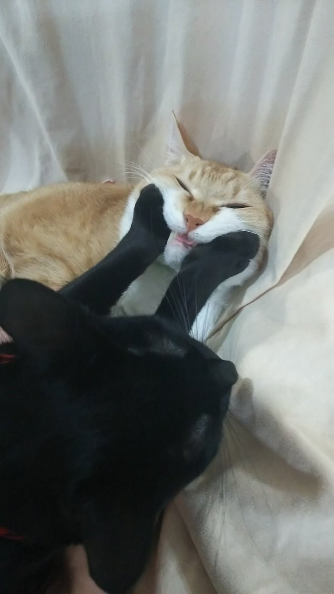 cat makes other cat smile lol