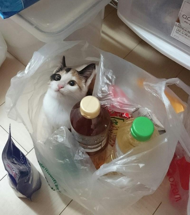 groceries plastic bag Cats - 9002082304