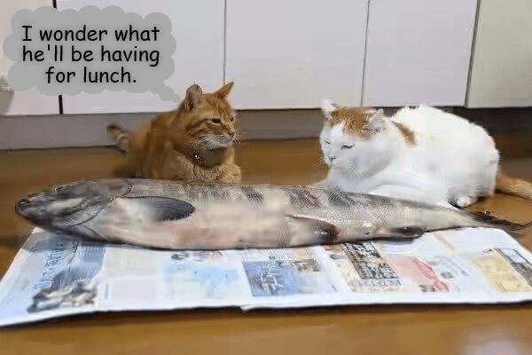 having lunch caption Cats wonder - 9002550016