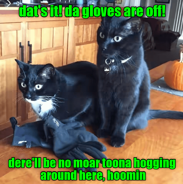 tuna gloves off hogging caption no Cats - 9002558464