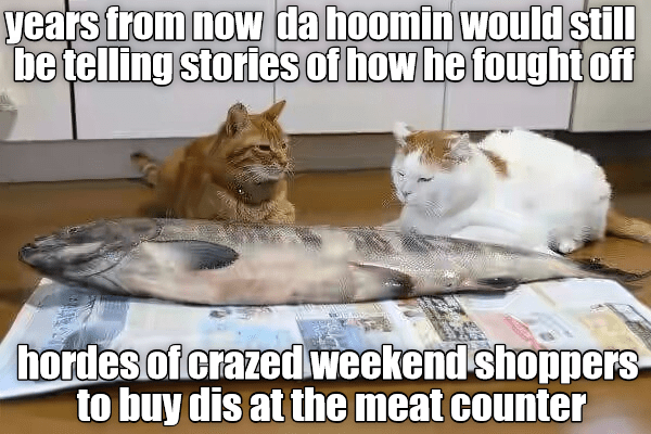 counter,human,years,fought,caption,stories,telling,Cats,meat,shoppers