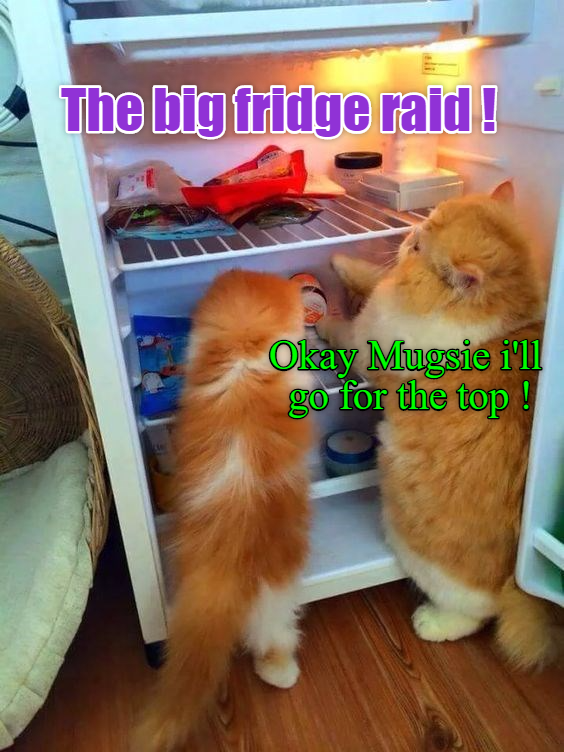raid,big,caption,fridge,Cats