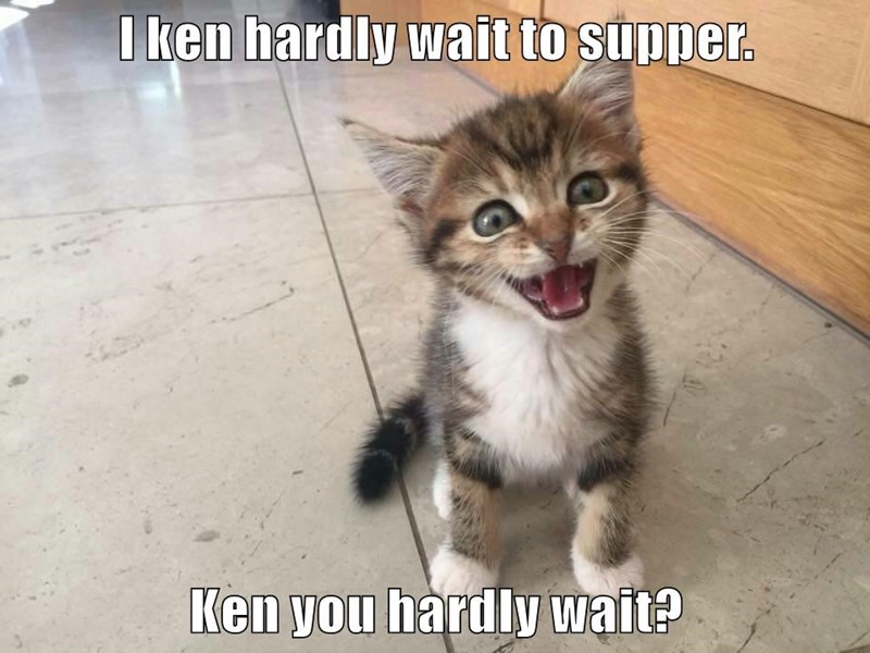 wait,supper,hardly,kitten,caption