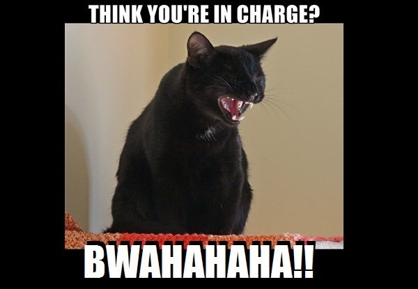 laughing caption Cats - 9002596096