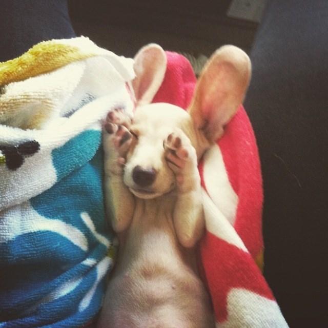 puppy,bears,bunny