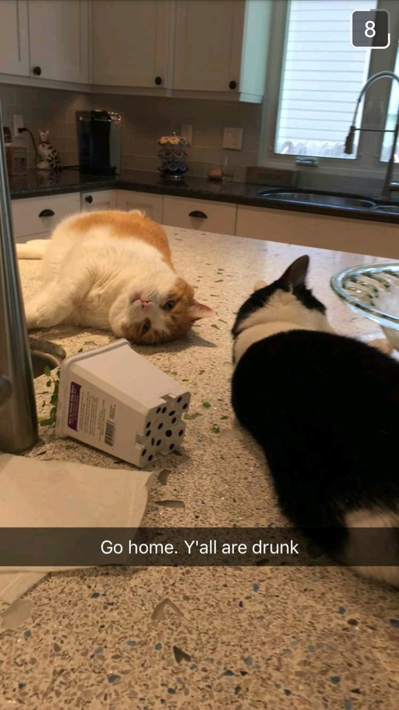 snapchat,catnip,wasted,Cats