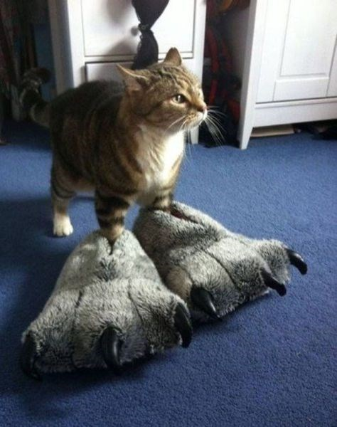 feet slippers Cats