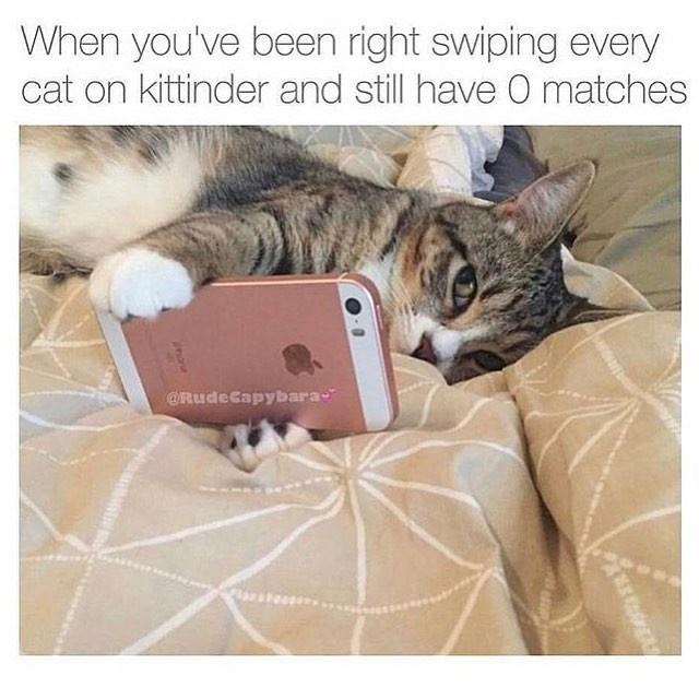 Memes Cats