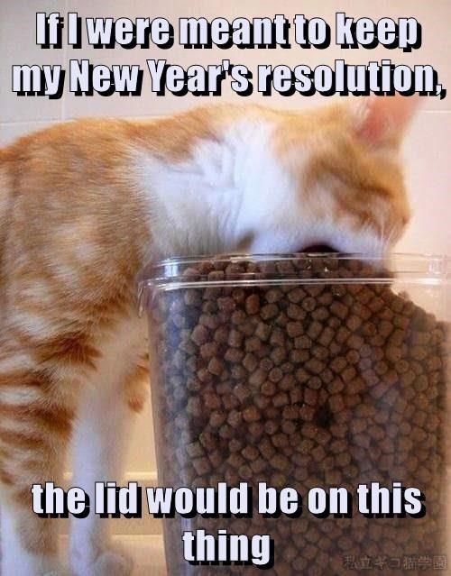 keep on cat if new years resolution lid caption meant - 9002632448