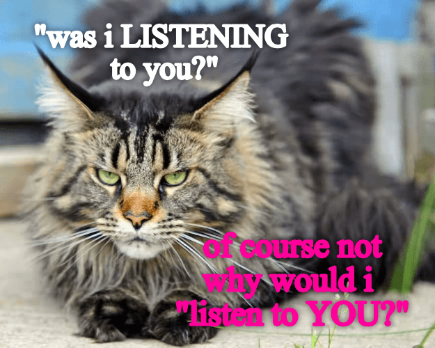 you cat was listen of course listening not caption why - 9002673408