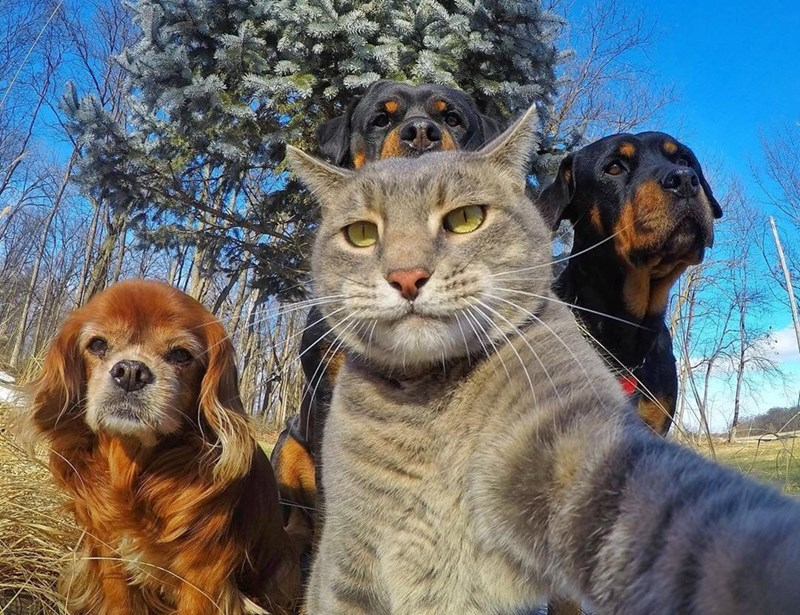 dogs squad selfie Cats - 9002703104