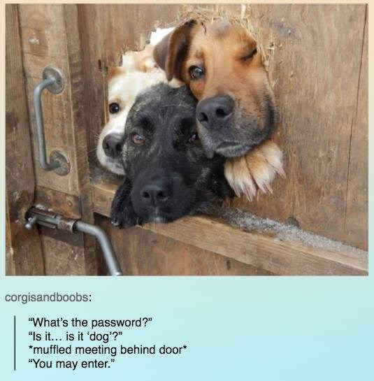 dogs password funny