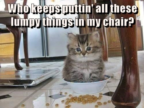 things chair lumpy kitten keeps who caption putting - 9002831616