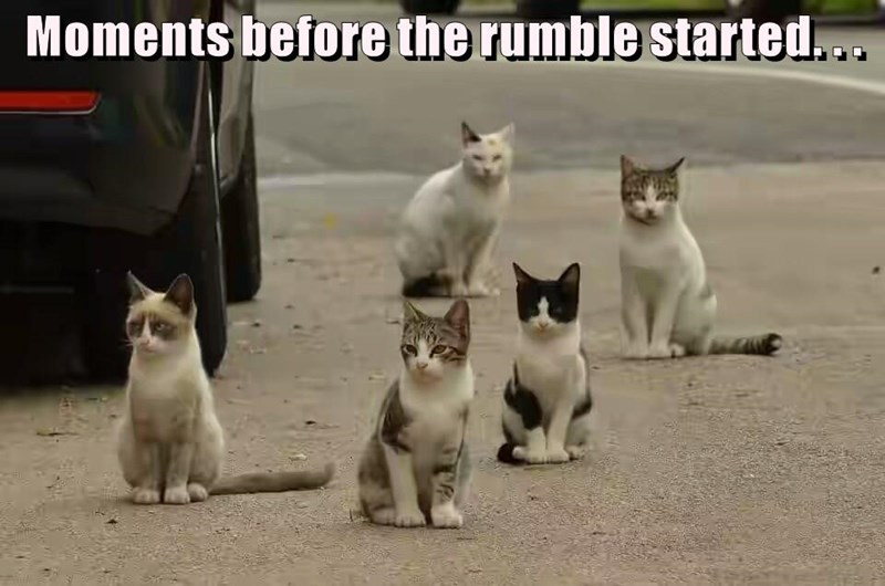 moments,rumble,caption,Cats,before