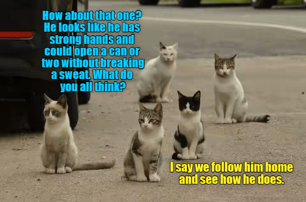 follow strong open can hands caption Cats home - 9002853888